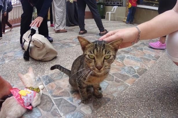 Siden innbyggerne er muslimer, så finnes det ikke hunder på øya, kun katter, med skremmende blikk.